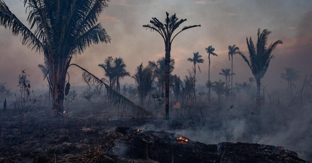 under-pressure,-brazil's-bolsonaro-forced-to-fight-deforestation