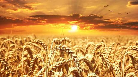 russia-projected-to-dominate-global-wheat-exports-for-years-to-come