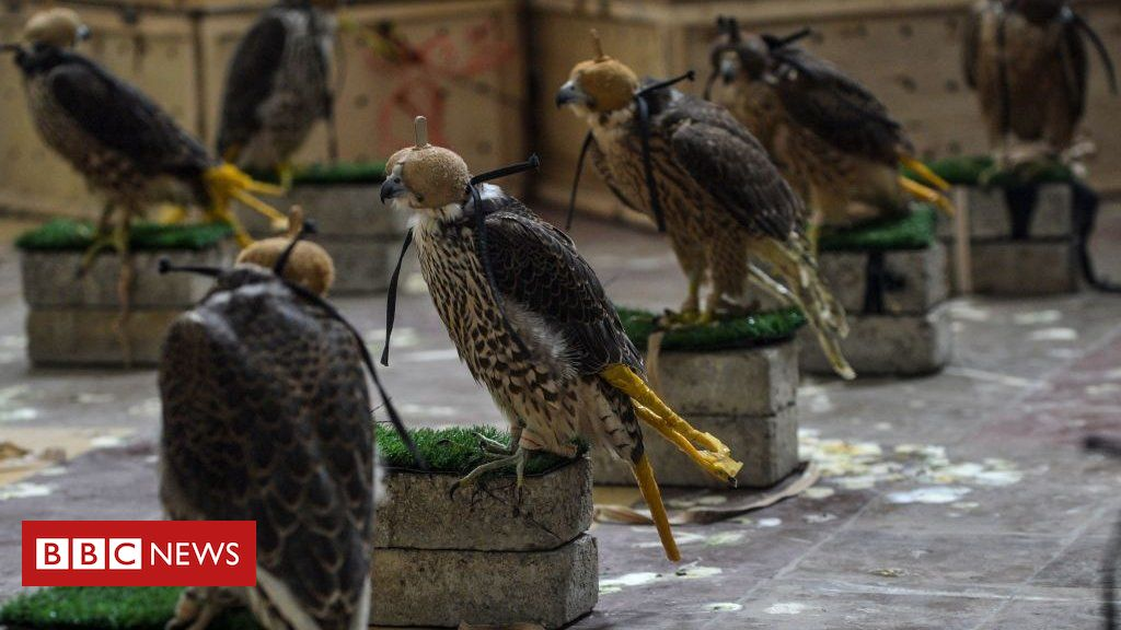 pakistan-stops-bid-to-smuggle-endangered-falcons