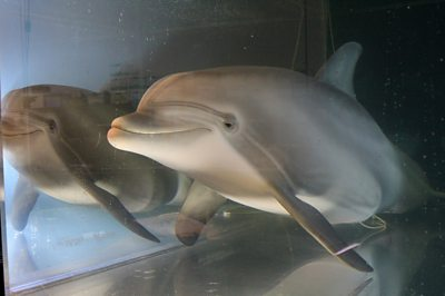 icymi:-robot-dolphins-and-a-skeleton-worth-millions