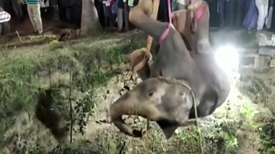 elephant-rescued-from-deep-well-in-a-14-hour-operation