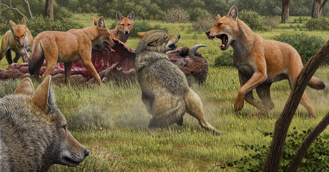 the-real-dire-wolf-ran-into-an-evolutionary-dead-end