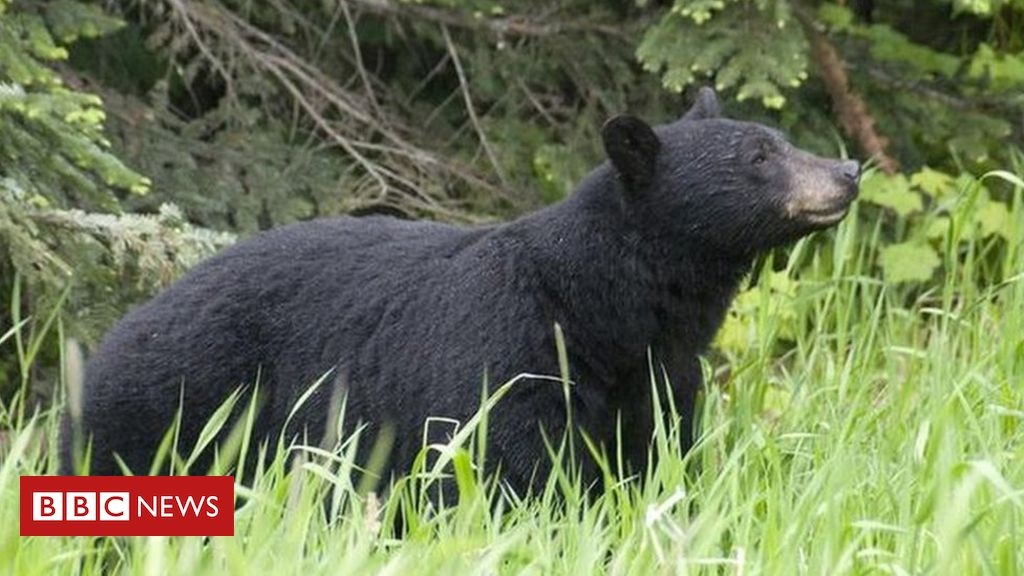 colorado:-woman-killed-in-apparent-bear-attack