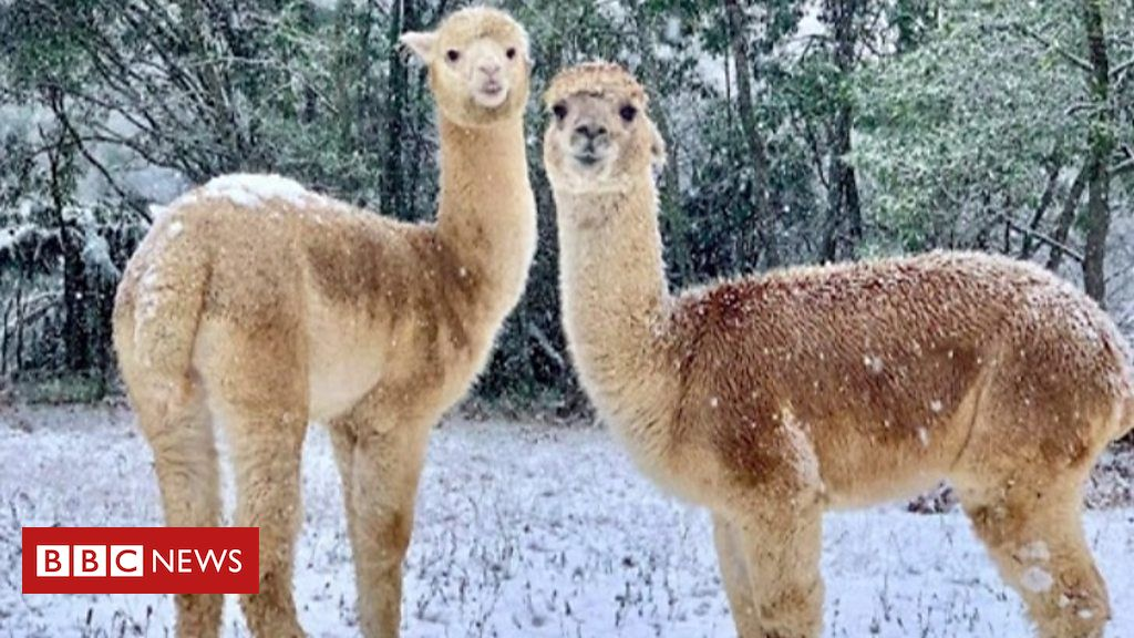 australia:-new-south-wales-and-victoria-face-coldest-weather-in-decades