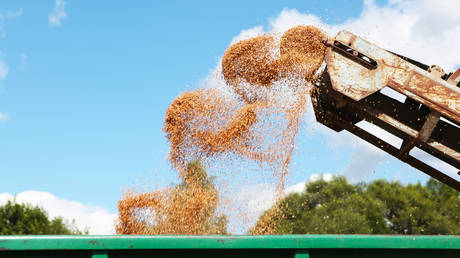 russia-boosts-grain-sales-as-floating-tax-on-wheat-exports-bears-fruit