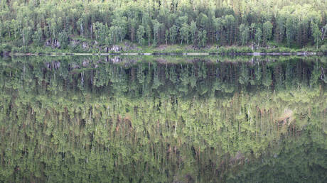 russian-lumber-producer-suggests-privatizing-country's-forests