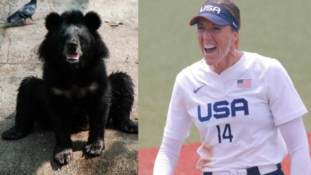 tokyo-olympics:-black-bear-at-softball-arena-still-not-caught-out